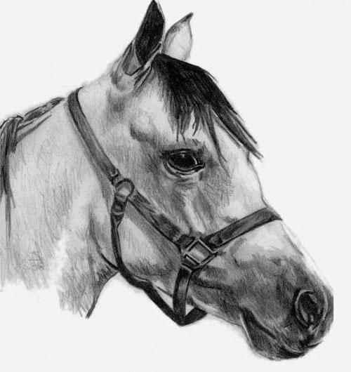 Dessin de chevaux facile - Chevaux dessins ...