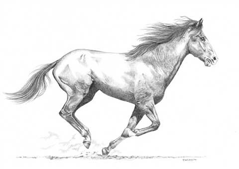 Jador les chevaux - Dessin un cheval ...