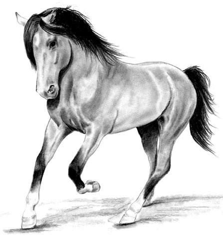 Jador les chevaux - Coloriage cheveaux ...